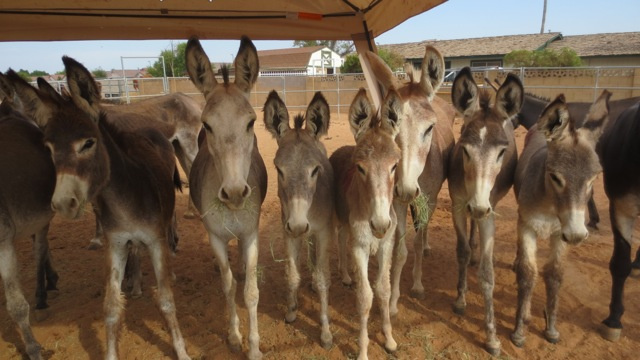 Help Feed a Burro Each Month