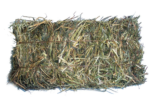 Buy a Bale of Hay !